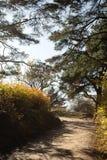 Όμορφο μονοπάτι στο πάρκο Στοκ εικόνα με δικαίωμα ελεύθερης χρήσης