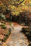 όμορφο μονοπάτι φθινοπώρο&up στοκ φωτογραφίες με δικαίωμα ελεύθερης χρήσης
