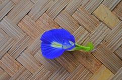 Όμορφο μπλε λουλούδι αμπέλων πεταλούδων Στοκ Εικόνα