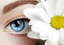 Όμορφο μπλε θηλυκό μάτι με το άσπρο λουλούδι άνοιξη Καθαρό δέρμα, σύνθεση μόδας naturel Καλό όραμα, υγειονομική περίθαλψη Στοκ Εικόνες