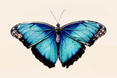 όμορφο μπλε διάνυσμα απεικόνισης πεταλούδων Στοκ Φωτογραφίες