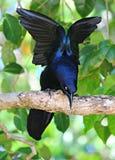 Όμορφο μπλε πουλί Στοκ φωτογραφία με δικαίωμα ελεύθερης χρήσης