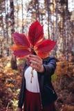 Όμορφο νέο ευτυχές κορίτσι με ένα φωτεινό κόκκινο φύλλο φθινοπώρου στο πάρκο ή το δάσος, έννοια πτώσης φθινοπώρου, φύλλα φθινοπώρ στοκ εικόνα