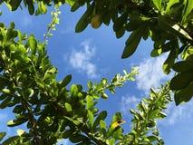 όμορφο να ανατρέξει υπαίθρια νεολαίες γυναικών Θα δείτε τα πράσινα φύλλα μπλε λευκό ουρανού σύννε στοκ εικόνα με δικαίωμα ελεύθερης χρήσης