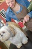 Όμορφο ξανθό σκυλί groomer στην εργασία Στοκ εικόνα με δικαίωμα ελεύθερης χρήσης