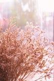 Όμορφο ξηρό λουλούδι λιβαδιών με τον τοίχο γυαλιού Στοκ Εικόνες
