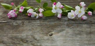 Όμορφο ξύλινο υπόβαθρο με τα λουλούδια της Apple Στοκ Εικόνα