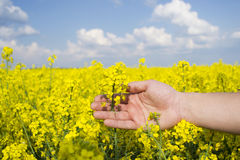 Όμορφο λουλούδι Ñ  olza στο φοίνικα αγροτών Στοκ φωτογραφία με δικαίωμα ελεύθερης χρήσης