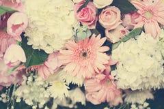 όμορφο λουλούδι ανασκόπ& Στοκ εικόνα με δικαίωμα ελεύθερης χρήσης