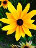 όμορφο λουλούδι κίτρινο Στοκ Εικόνα