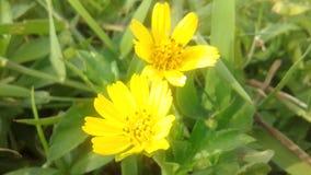 όμορφο λουλούδι κίτρινο Στοκ φωτογραφία με δικαίωμα ελεύθερης χρήσης