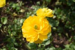 όμορφο λουλούδι κίτρινο Στοκ φωτογραφίες με δικαίωμα ελεύθερης χρήσης