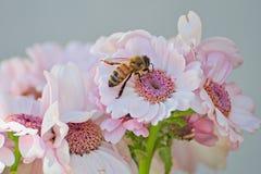 όμορφο λουλούδι πεταλ&omic Στοκ Εικόνα
