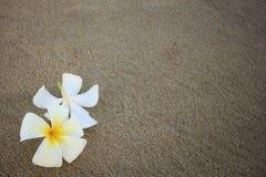 Όμορφο λουλούδι που απομονώνεται στην κενή παραλία Στοκ φωτογραφία με δικαίωμα ελεύθερης χρήσης