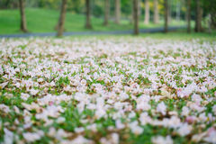 Όμορφο λουλούδι σαλπίγγων που ανθίζει, εκλεκτική εστίαση στοκ εικόνα