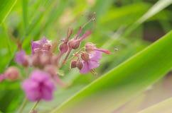 Όμορφο λουλούδι την άνοιξη Στοκ φωτογραφία με δικαίωμα ελεύθερης χρήσης