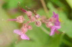 Όμορφο λουλούδι την άνοιξη Στοκ Εικόνες