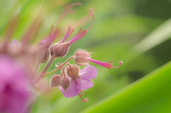 Όμορφο λουλούδι την άνοιξη Στοκ εικόνα με δικαίωμα ελεύθερης χρήσης