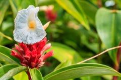 όμορφο λουλούδι Στοκ Φωτογραφία
