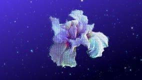 όμορφο λουλούδι απόθεμα βίντεο