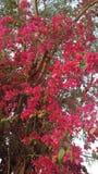 Όμορφο λουλούδι Στοκ εικόνα με δικαίωμα ελεύθερης χρήσης