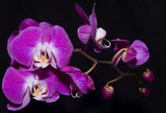 όμορφο λουλούδι Στοκ Εικόνα
