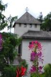 Όμορφο λουλούδι Fucsia σε έναν κήπο, Lienz Στοκ φωτογραφία με δικαίωμα ελεύθερης χρήσης