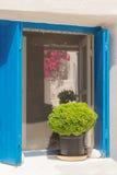 Όμορφο δοχείο διακοσμήσεων με το πράσινο λουλούδι σε το έξω από ένα παράθυρο στο νησί Paros στην Ελλάδα Στοκ φωτογραφία με δικαίωμα ελεύθερης χρήσης
