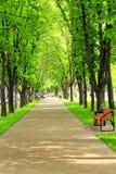 Όμορφο πάρκο με τη συμπαθητική πορεία περιπάτων και τα μεγάλα πράσινα δέντρα Στοκ εικόνες με δικαίωμα ελεύθερης χρήσης