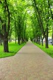 Όμορφο πάρκο με τη συμπαθητική πορεία περιπάτων και τα μεγάλα πράσινα δέντρα Στοκ Εικόνες