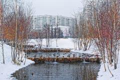 Όμορφο πάρκο πόλεων στα περίχωρα της πόλης Χειμώνας, θλιβεροί ουρανός και ισχυρή χιονόπτωση Οι πάπιες διαχειμάζουν σε ένα ξεπαγωμ στοκ φωτογραφία