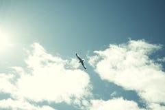 όμορφο πέταγμα πουλιών Στοκ φωτογραφίες με δικαίωμα ελεύθερης χρήσης