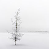 Όμορφο παγωμένο δέντρο Στοκ φωτογραφία με δικαίωμα ελεύθερης χρήσης