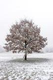 Όμορφο παγωμένο δέντρο Στοκ εικόνα με δικαίωμα ελεύθερης χρήσης