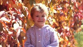 Όμορφο παιδί στο πουλόβερ στη φύση φθινοπώρου Ευτυχή γέλια παιδιών υπαίθρια στο υπόβαθρο φύλλων φθινοπώρου Παιδί μικρών παιδιών ή απόθεμα βίντεο