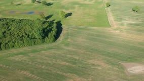 Όμορφο πανόραμα καλλιεργήσιμου εδάφους άνοιξη με τα άλση και τα δέντρα, εναέρια απόθεμα βίντεο