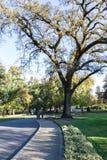 Όμορφο παλαιό δρύινο δέντρο Στοκ Εικόνα