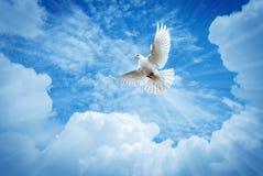 Όμορφο περιστέρι σε ένα σύμβολο μπλε ουρανού της πίστης στοκ φωτογραφία