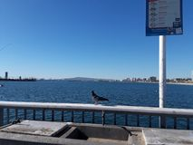 Όμορφο περιστέρι στο υπόβαθρο της θάλασσας Ένα περιστέρι κάθεται στο φράκτη κοντά στη θάλασσα Υπόβαθρο Περιστέρι στο φράκτη στοκ φωτογραφία με δικαίωμα ελεύθερης χρήσης