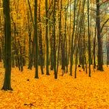 Όμορφο πεσμένο πάρκο Στοκ Εικόνες