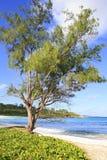 Όμορφο πεύκο στην παραλία Anse Cocos Στοκ φωτογραφία με δικαίωμα ελεύθερης χρήσης