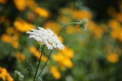 όμορφο πλήρες λιβάδι λουλουδιών Στοκ φωτογραφία με δικαίωμα ελεύθερης χρήσης