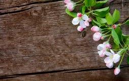 Όμορφο πλαίσιο των λουλουδιών της Apple Στοκ Εικόνες
