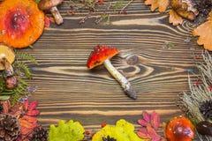 Όμορφο πλαίσιο των φυσικών υλικών, μανιτάρια, κώνοι, φύλλα φθινοπώρου, αγαρικά μυγών, μούρα Καφετί ξύλινο υπόβαθρο φθινοπώρου Στοκ Εικόνες