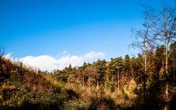 Όμορφο πολωνικό χρυσό φθινόπωρο στοκ φωτογραφία με δικαίωμα ελεύθερης χρήσης