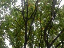 Όμορφο πολύβλαστο τοπ τοπίο δέντρων στο OU πτώσης φύλλων χρωμάτων φθινοπώρου Στοκ φωτογραφία με δικαίωμα ελεύθερης χρήσης