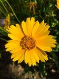 όμορφο πορτοκάλι λουλ&omicro στοκ εικόνες με δικαίωμα ελεύθερης χρήσης