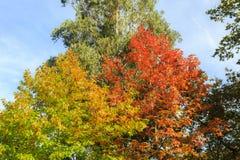 Όμορφο πορτοκαλί και κόκκινο δάσος φθινοπώρου Στοκ εικόνες με δικαίωμα ελεύθερης χρήσης