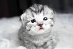 όμορφο πορτρέτο γατακιών γατάκι μωρών καλό Στοκ εικόνα με δικαίωμα ελεύθερης χρήσης