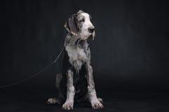 όμορφο πορτρέτο σκυλιών Στοκ εικόνες με δικαίωμα ελεύθερης χρήσης